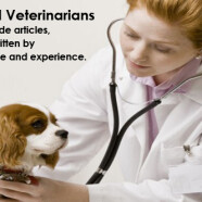 Qualified and Experienced Veterinarians